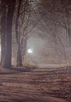 road, wood, ways