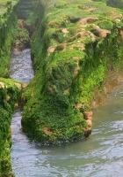 rocks, moss, water