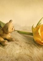 rose, flower, bear