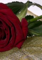rose, flower, mesh