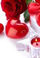 rose, flower, ribbon