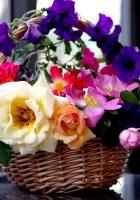 rose, garden, petunia