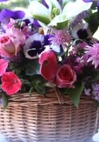 rose, petunia, lilac