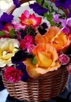 rose, petunia, pansy