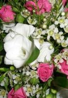 rose, tea tree, flowers