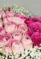 roses, buds, heart