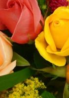 roses, flowers, chrysanthemum