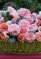 roses, flowers, loose