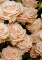 roses, flowers, tea