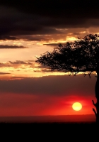 savanna, tree, lonely