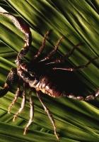 scorpion, leaves, plants