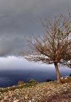sea, road, tree