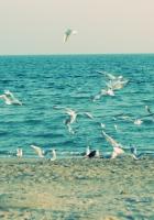 sea, shore, seagulls