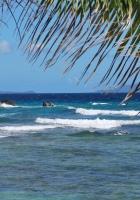 sea, waves, palm