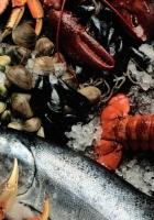 seafood, fresh, fish