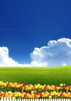 serenity, tulips, fence
