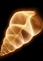 shell, shape, smoke
