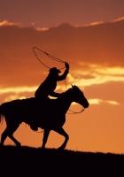 silhouette, evening, equestrian