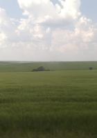 sky, grass, nature