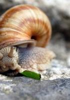 snail, shell, stone