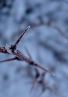 snow, branch, frost