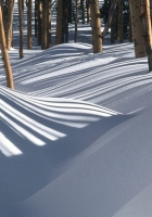 snowdrifts, wood, shades