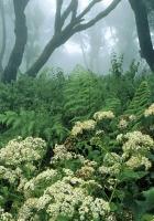 spain, wood, vegetation