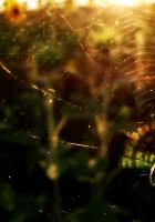 spider, flowers, light