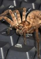 spider, keyboard, big