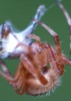 spider, web, mucus