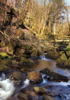 spring, forest, river