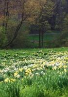 spring, grass, flowers