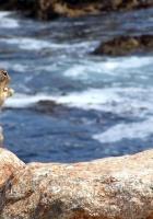 squirrel, sea, food