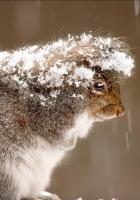 squirrel, snow, cold