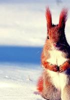 squirrel, snow, hunting