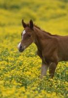 stallion, cub, grass
