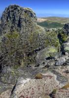 stones, moss, vegetation