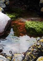 stones, water, pool
