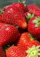 strawberry, crop, shine
