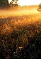 sun, gleams, herbs
