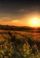 sunset, field, landscape