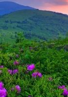 sunset, mountains, plants