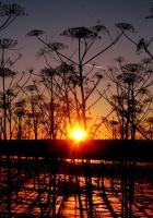 sunset, plants, landscape