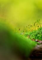 surface, grass, moss