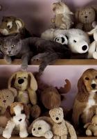 toys, dog, cat