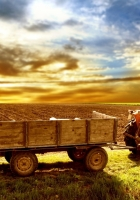 tractor, field, arable land