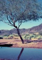 tree, bush, pool