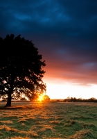 tree, decline, clouds