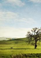 tree, field, hills