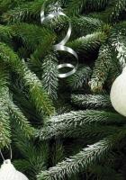 tree, needles, christmas decorations